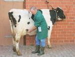 Diagnostika březosti krav, porodní pomůcky pro telata