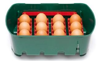 Líheň kuřat Covina - nasazení vajec