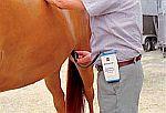 Diagnostika březosti klisen - HK-přístroj pro diagnostiku březosti koní