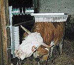 Potřeby pro čištění dobytka - péče o srst skotu