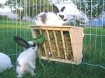 Vybavení králíkáren - jesle na seno pro králíky, kameninové misky, krmné automaty pro králíky
