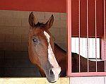potřeby pro koňské stáje