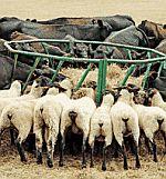 Krmelce pro ovce, krmné kruhy, jesle na seno pro ovce