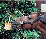 Solné lizy a minerální lizy pro koně - Biosaxon, Likit
