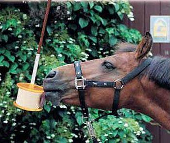 Solné lizy a minerální lizy pro koně