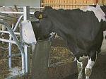 Napaječky pro dobytek, skot, krávy
