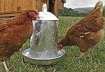 Napáječky pro drůbež - kuřata, slepice, holuby