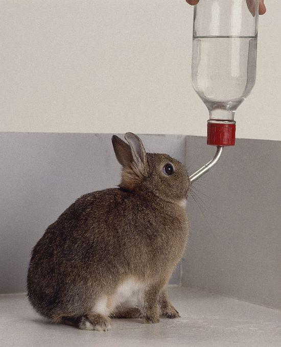 Napájecí láhve a napáječky pro králíky, morčata a drobné hlodavce