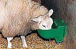 Napaječky pro ovce, vyhřívané napáječky pro ovce