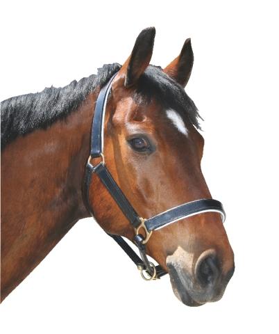 Ohlávky pro koně