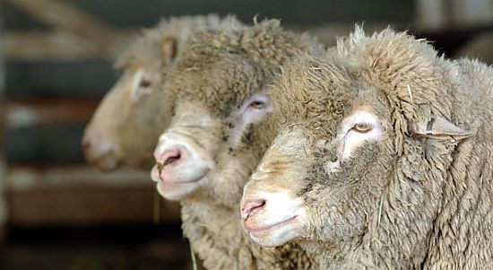 Potřeby pro ovčíny a salaše