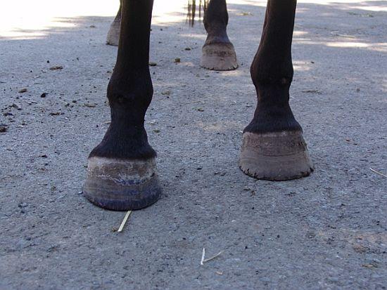 péče o kopyta koní