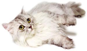 chovatelské potřeby pro kočky, potřeby pro chovatele koček, kočičí potřeby