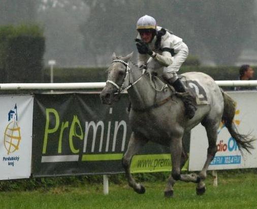 Krmiva pro koně Premin, minerální vitamínová krmiva pro koně