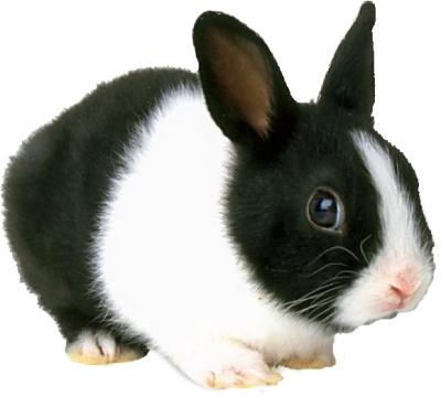 chovatelské potřeby pro králíky, morčata a drobné hlodavce