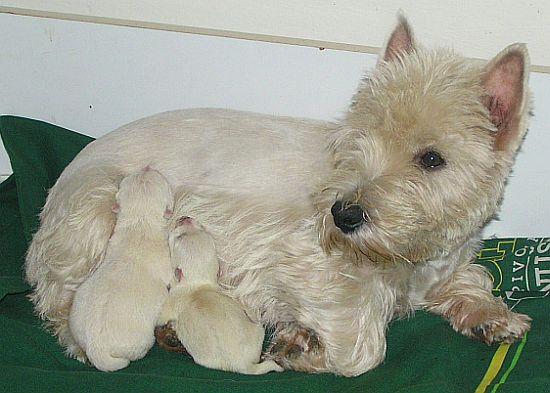 chovatelské potřeby pro psy, potřeby pro chovatele psů, psí potřeby