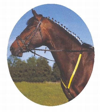 Reflexní poprsák pro koně