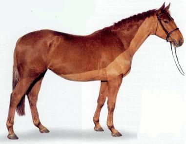 stříhání koní