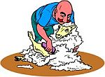 Stříhací strojky na ovce, strojky na stříhání ovcí