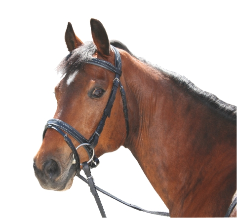 Uzdečky pro koně