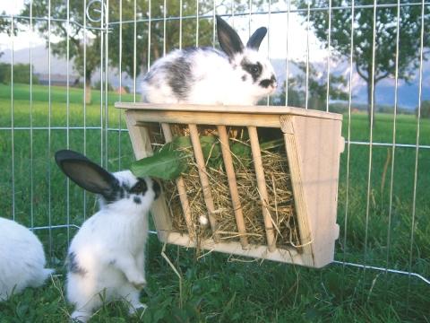 Vybavení králíkáren - jesle na seno pro králíky